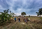 Call for proposals: enhancing access to markets for smallholder farmers in Malawi